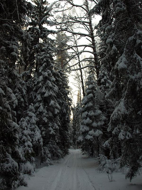 Путь меж деревьев. Черноголовка, зима 2009