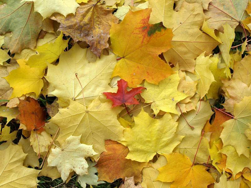 Узор опавшей листвы... Москва, осень 2008