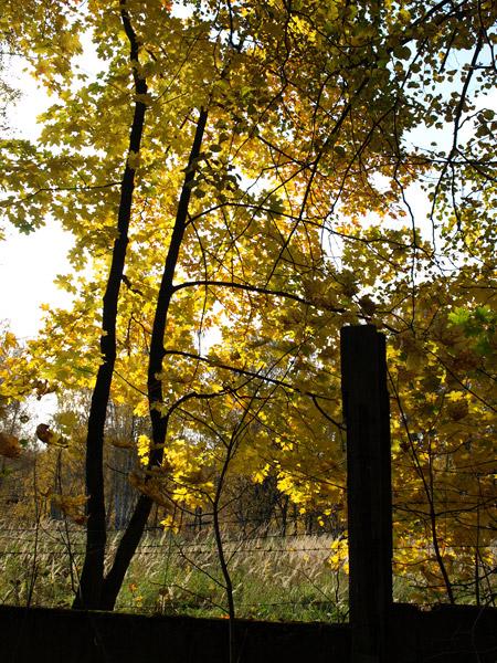 Контуры и золото... Нахабино, осень 2008