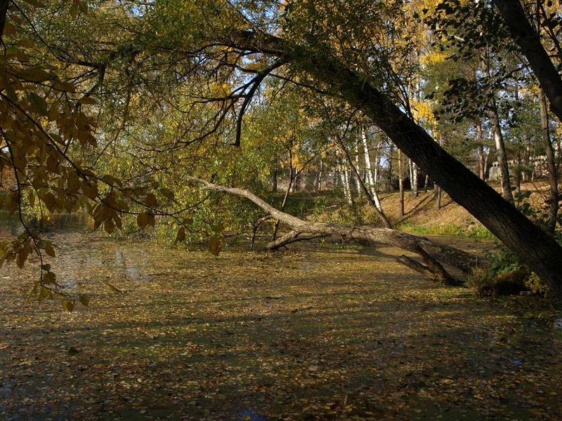 Тихая заводь Нахабино, осень 2008