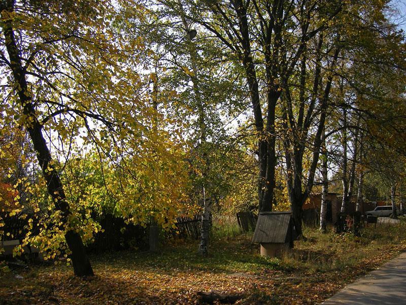 В тени вязов.. Нахабино, осень 2007