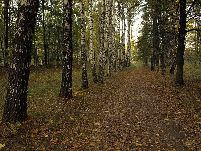 Осенняя аллея Нахабино, осень 2009