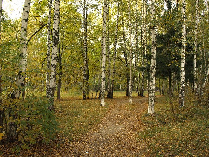 Осенний парк. Нахабино, осень 2009