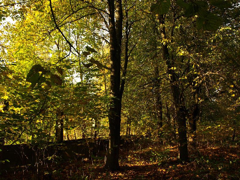 Лучи и листья... Нахабино, осень 2009