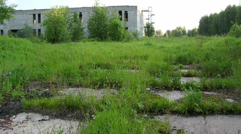 Природа наступает и поглощает следы людей... Толстопальцево, лето 2004