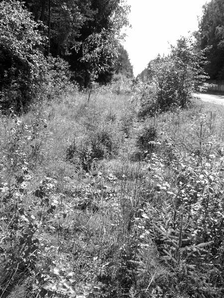 Путь исчез. Осталась лишь зыбкая память. Нахабино, лето 2006